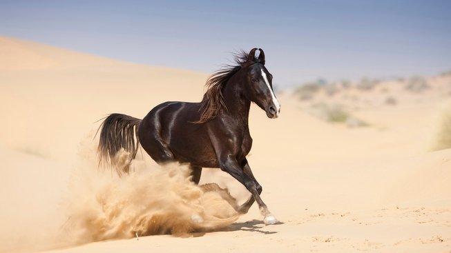 Vzácný kůň s podivnýma ušima