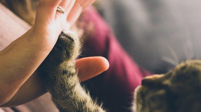 I kočka je nejlepší přítel člověka, říká studie