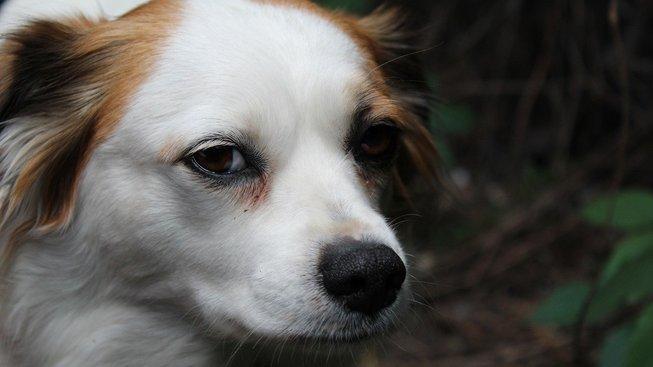 dog-3422728_1280