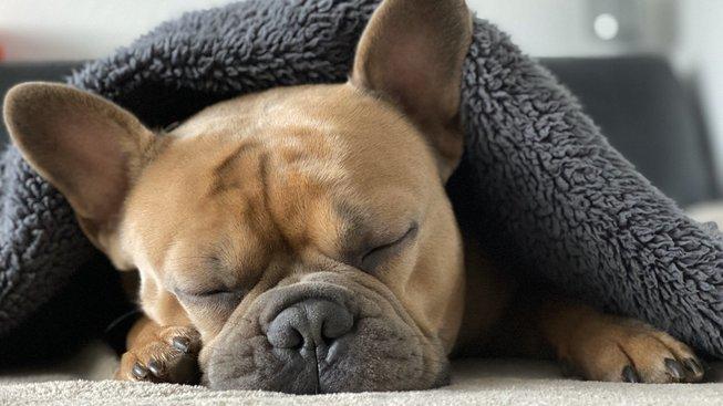 Má pes v ložnici vliv na kvalitu spánku?