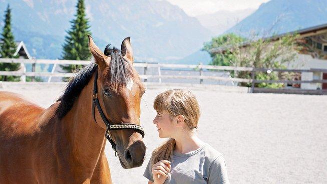 horse-5005158_1280