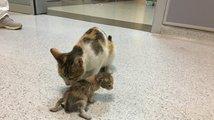 Kočičí máma v nemocnici
