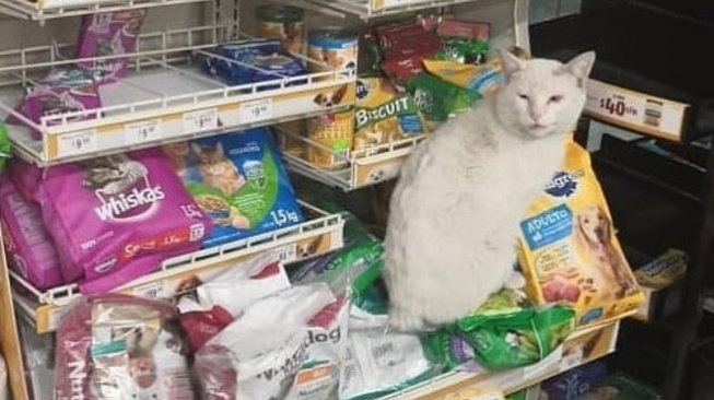 Podívejte se, jak se naučil nakupovat tenhle kocourek