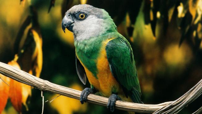 Tichý a přátelský papoušek
