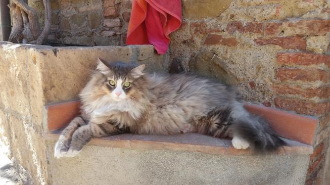 cat-1622599_1920