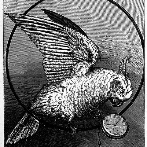 Parrot_Theif_Drawing