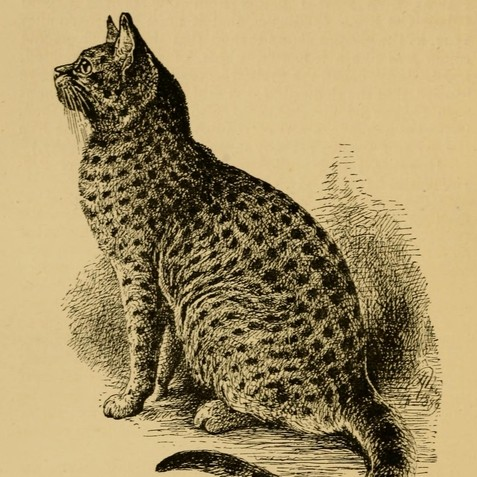 Our_cats_and_all_about_them_(Page_54)_BHL18095140