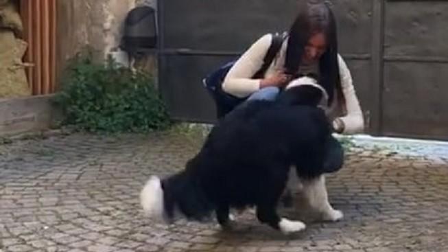Nekonečná psí radost! Podívejte se na kouzelné shledání po dvou měsících karantény