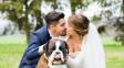 Chcete mít psa na své svatbě? Na tohle byste měli myslet