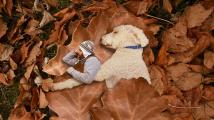 Obří pes Juji