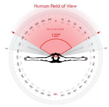 lidské zorne pole