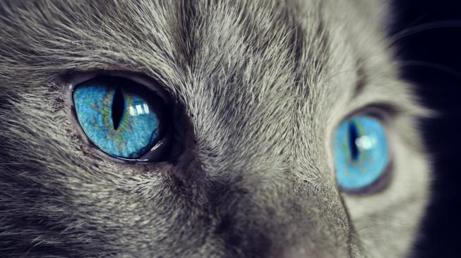 Jak vidí mazlíčci: Kočky