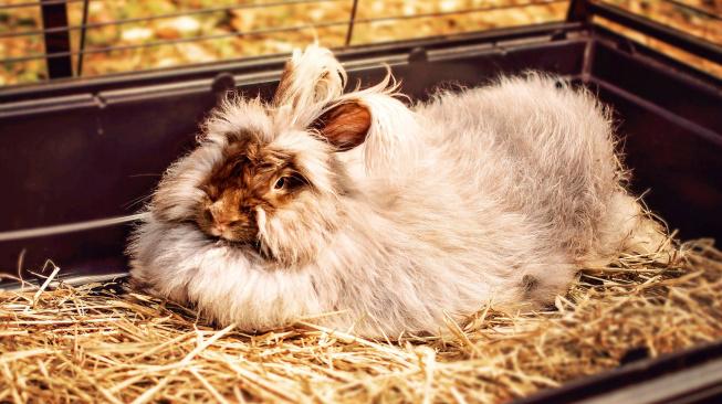 rabbit-749524_1920