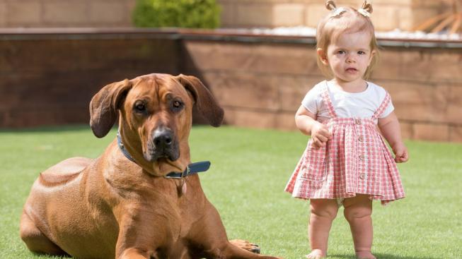 Postižená holčička se naučila chodit díky svému psovi