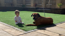 Pes rozchodil batole