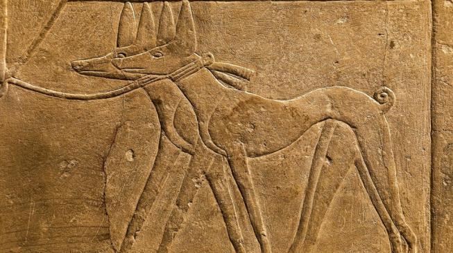 Staroegyptský pes Tesem