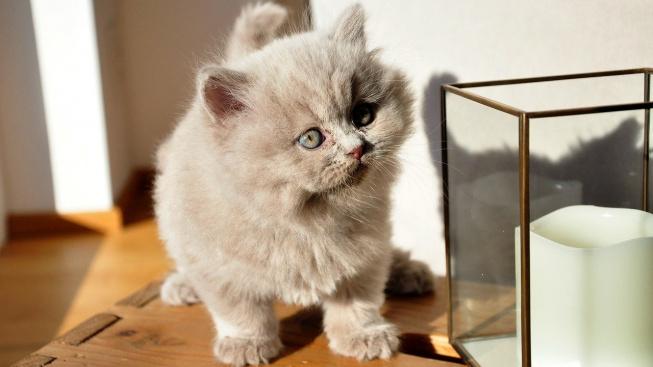 kittens-4023932_1280