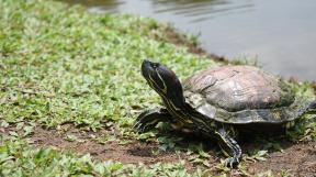 turtle-2474600_1920