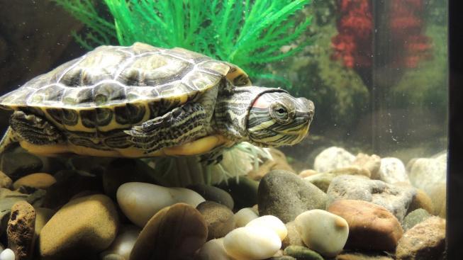 tortoise-980000_1920
