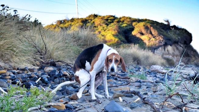 Proč na nás psi tak upřeně zírají, když vykonávají potřebu?