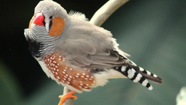 bird-177887_1280