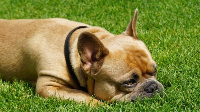 Má váš pes neustále žízeň? Zbystřete!