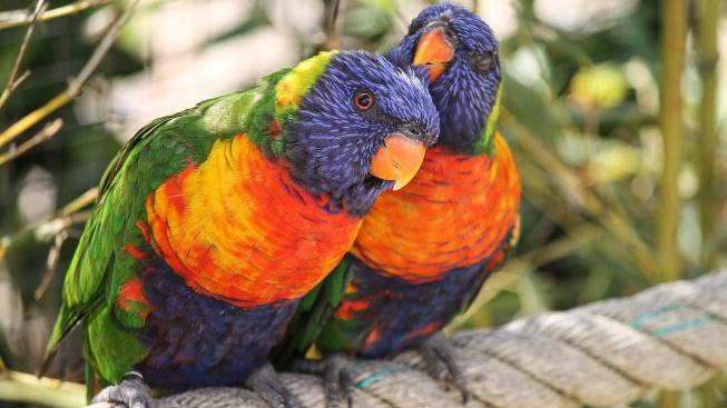 parrots-4327413_1280