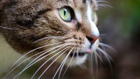 cat-4805756_1920