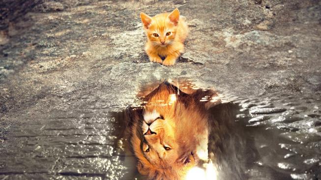 Domestikace koček se zrcadlí v genech