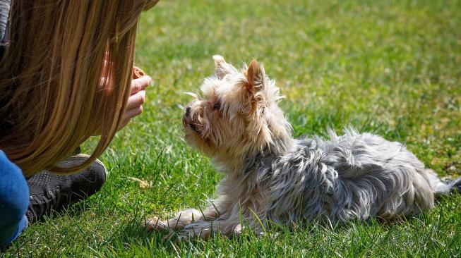 I psi se perou s pubertou, říká nová studie