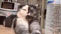Dvoubarevná kočička Cat