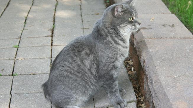 cat-367222_1920