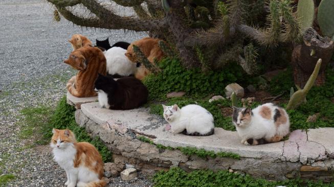 cats-1980472_1920