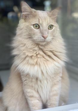 kitty-3883269_1920