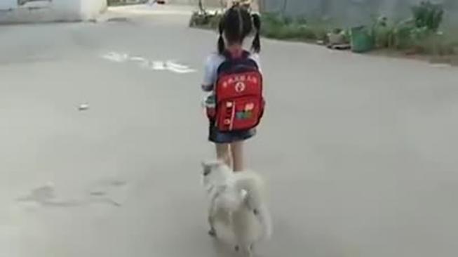 Věrný psí bodyguard vodí 'svou holčičku' do školy