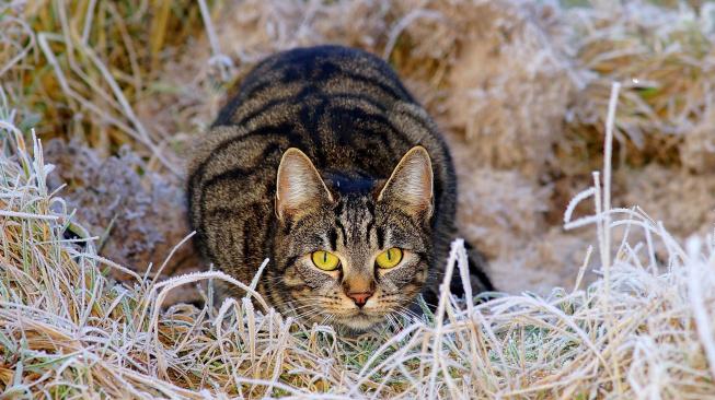 Proč na nás kočky tak upřeně zírají?