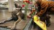 Malčik - toulavý pes z Moskvy, kterého ubodala fotomodelka