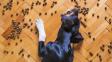 Jak dlouho vydrží psi bez jídla?