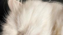 Slepá kočička