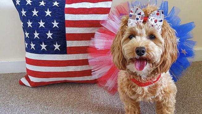 Seznamte se Lolou, jednou z nejžádanějších psích modelek