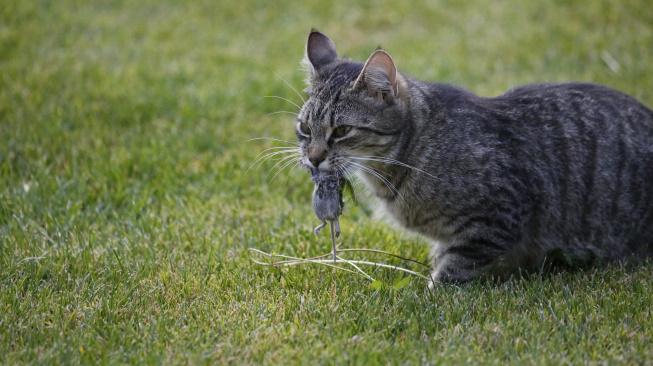 Jak odradit kočku od loveckých výprav