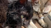 Dvouhlavá kočička