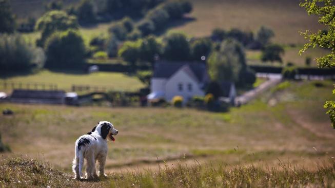 Jak psi zvládnou najít cestu domů?