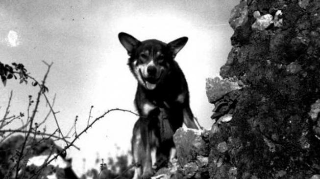 Chips - psí válečný hrdina