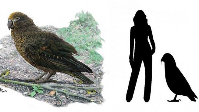 Kdo byl největším papouškem všech dob?