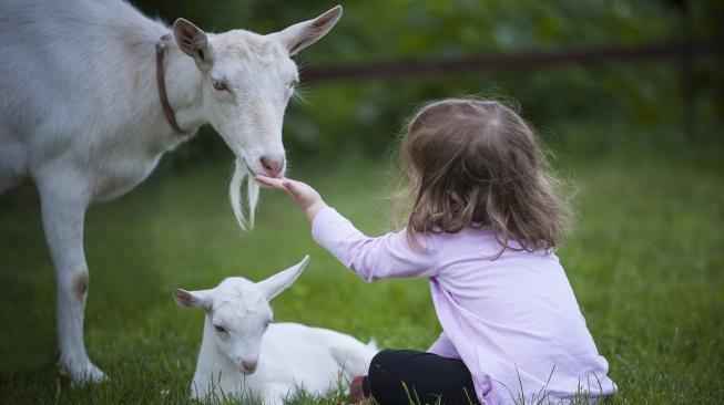 Kozy jsou stejně chytré a milující jako psi, říkají vědci