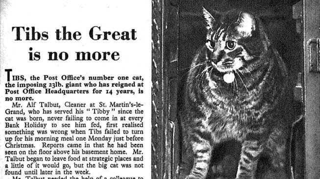 Tibs Veliký a britské poštovní kočky
