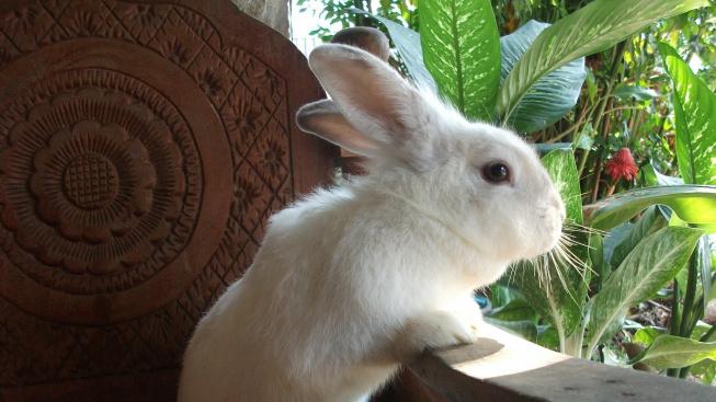 the-bunny-house-934128_1920