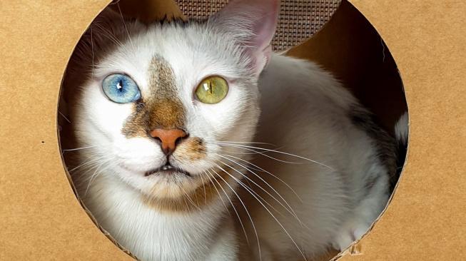 Má každé oko jiné, jmenuje se Bowie a internet ho miluje