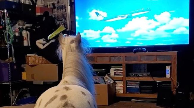Mini kůň, co místo pobíhání venku radši doma kouká na televizi
